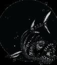 piranha_toranja