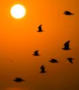 SunsuetCapuchosBirds