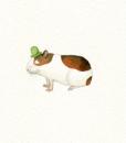 animal.porq_