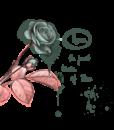 Zita-Pinto_Rose-2